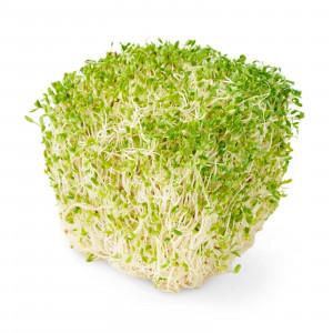 Микрозелень Подсолнечник+люцерна